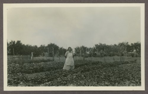 Mr. and Mrs. F. J. Severin's garden in Seward County, Kansas - Page
