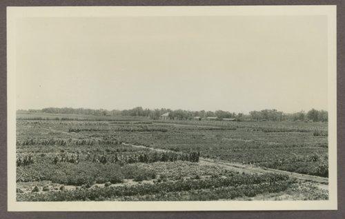 Community gardens at Cimarron, Kansas - Page