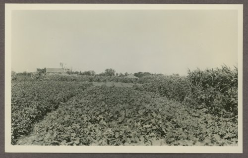 Community gardens at Norton, Kansas - Page