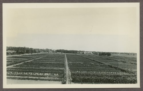 Community gardens in Dodge City, Kansas - Page