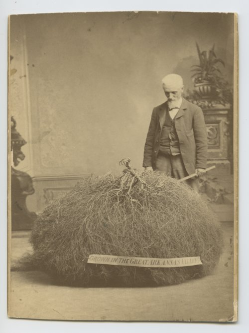 Henry Worrall with a plant grown in the great Arkansas Valley - Page