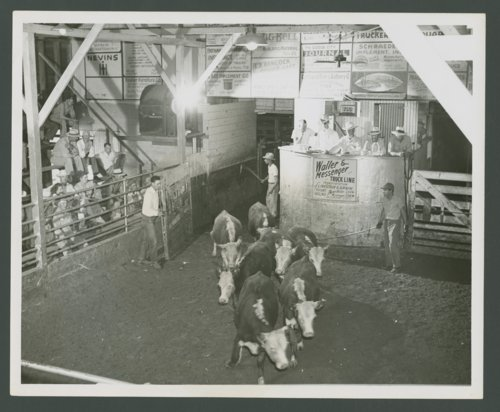 Cattle auction, Dodge City, Kansas - Page