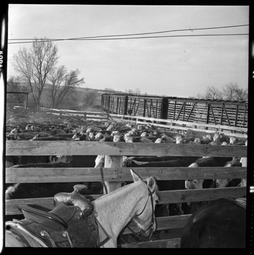 Stockyards, Eskridge, Kansas - Page