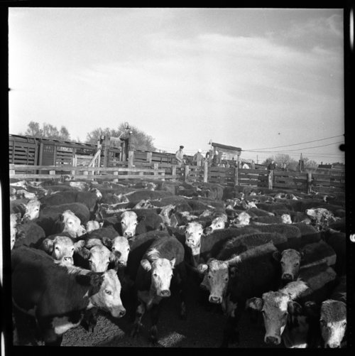 Stockyards, Eskridge, Kansas - Page
