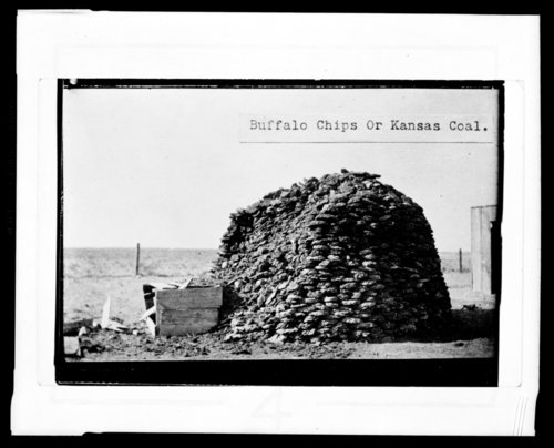 Buffalo chips or Kansas coal, Ellsworth County, Kansas - Page