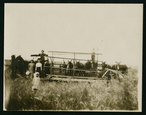 Harvesting scene, Preston, Kansas - Page