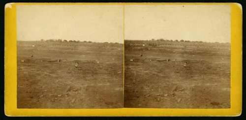 Prairie dog town, Abilene, Kansas - Page
