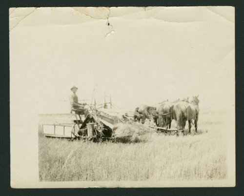 Harvest scenes in Sedgwick County, Kansas - Page
