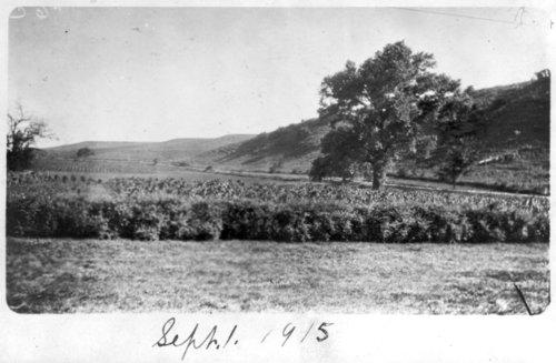 Rogler Ranch - Page
