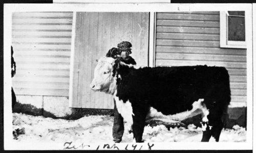 Wayne Rogler with heifer at Rogler Ranch - Page