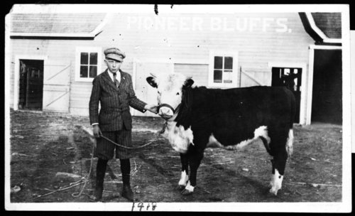 Boy with calf, Rogler Ranch - Page