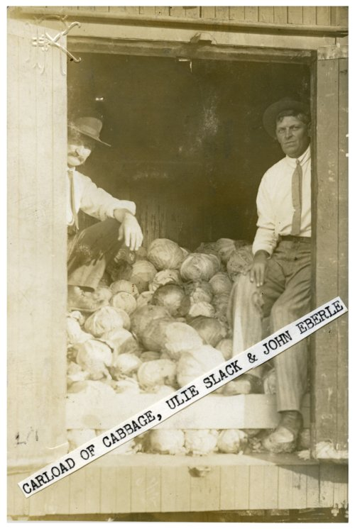 Unloading boxcar of cabbage in Alta Vista, Kansas - Page