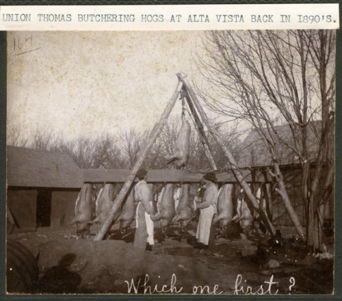 Hog butchering in Alta Vista, Kansas - Page