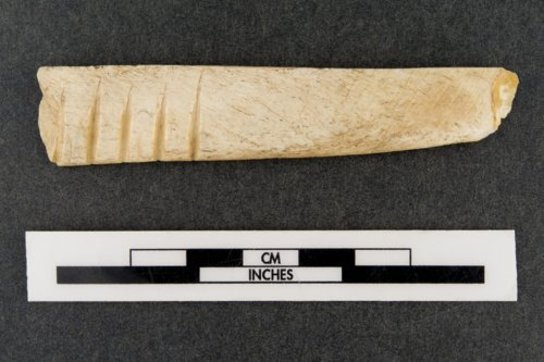 Bone Rasp from the Saxman Site, 14RC301 - Page