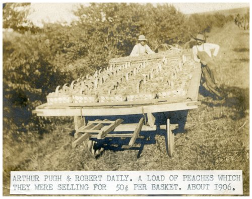Harvesting peaches in Wabaunsee County, Kansas - Page