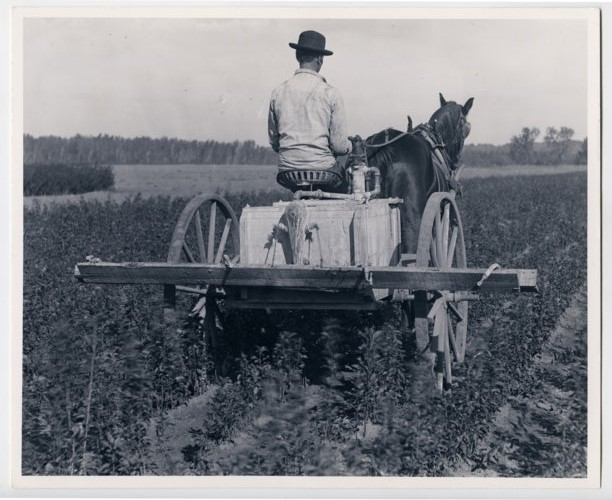 Horse-drawn sprayer - Page