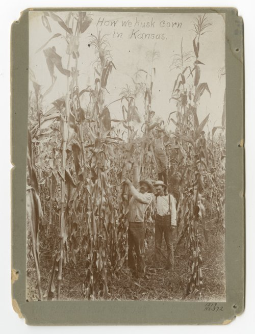 """How we husk corn in Kansas"" - Page"