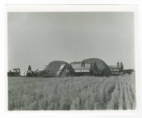 Harvesting, Decatur County, Kansas - Page