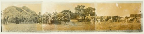 Threshing crew on the John Melton farm in Osborne County, Kansas - Page