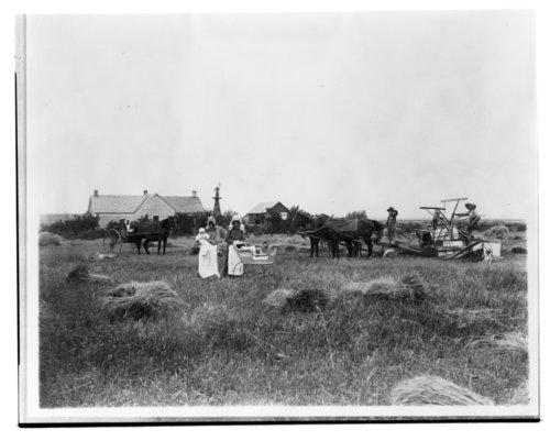 Harvest scene - Page