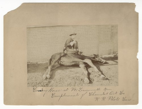 Cavalry horses at Fort Leavenworth, Kansas - Page