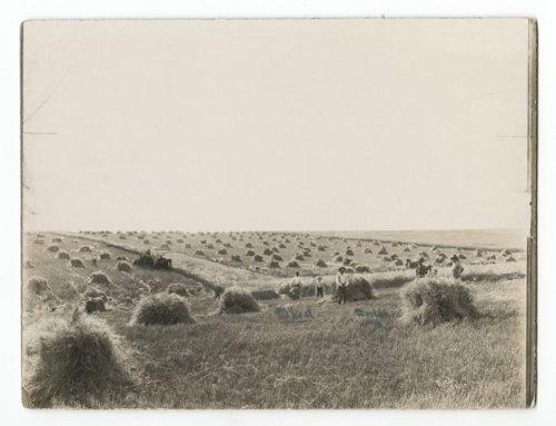Binding & Shocking wheat - Page