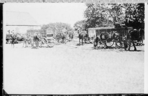 Wagons hauling wheat in Kendall, Hamilton County, Kansas - Page