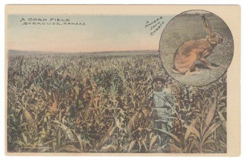 Corn field in Hamilton County, Kansas - Page