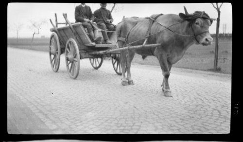 Ox & wagon Nr. Cublenz, South of Bonn, Germany - Page