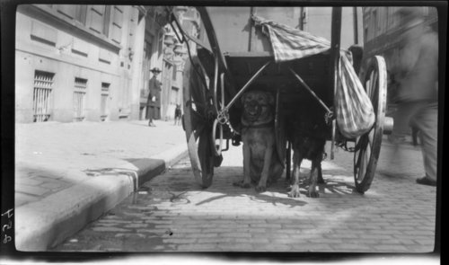 Dog Wagon, Bruxelles, Belgium - Page