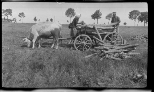 Delivering wood, Nr. Kilberg - Page