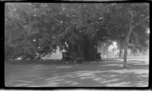 Banyan, Palace Square, Hawaii - Giant Tree - Page