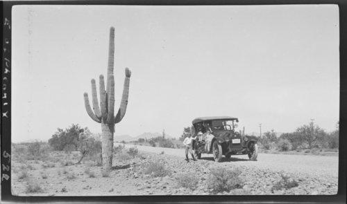 Cactus - east of Phoenix, AZ - Page