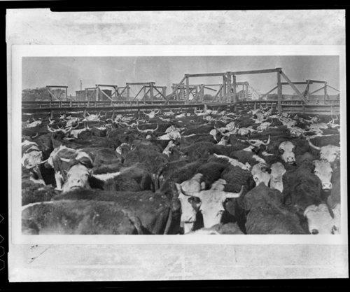 Stockyards Bazaar, Kansas - Page