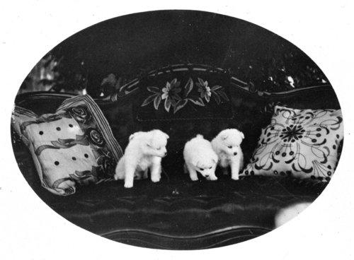 Puppies, John Fenton Pratt ranch, Studley, Sheridan County, Kansas - Page