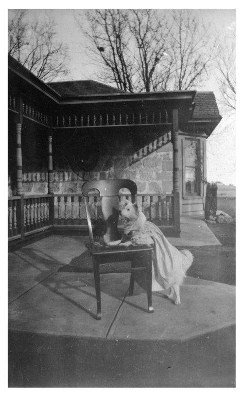 A dog in a dress, John Fenton Pratt home, Studley, Sheridan County, Kansas - Page