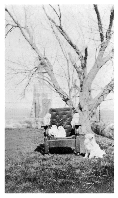 Puppies, John Fenton Pratt home, Studley, Sheridan County, Kansas - Page