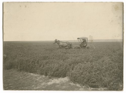E.H. Lupton in a Sheridan County farm field - Page