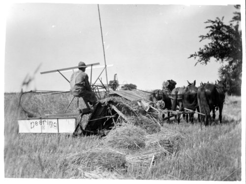 Binding wheat, Greeley County, Kansas - Page