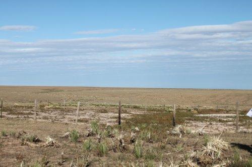 Santa Fe Trail - Cimarron National Grassland Segment 4 - Page