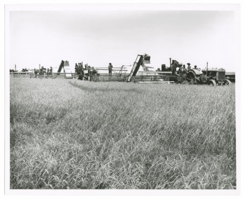 Wheat harvest, Trued Ranch, Greeley County, Kansas - Page
