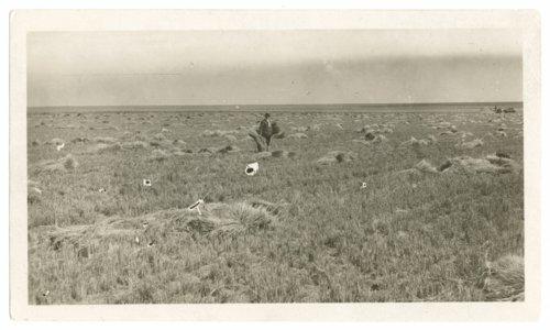 F. Hanson shocking wheat near Goodland, Kansas - Page