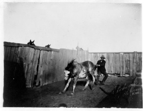 Horse-breaking, Greeley County, Kansas - Page