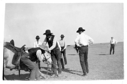 Saddling a newly-broke horse, Greeley County, Kansas - Page