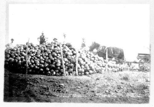 Krong's pumpkin pile, Greeley County, Kansas - Page