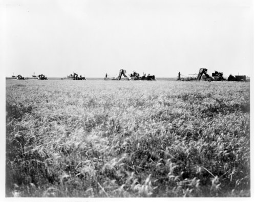 Combining wheat on the Trued Ranch, Greeley County, Kansas - Page