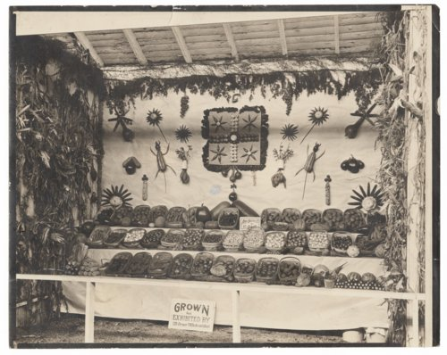 Vegetables grown, sold and exhibited by J. W. Orner - Page