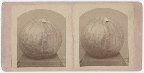 Pumpkins - Page