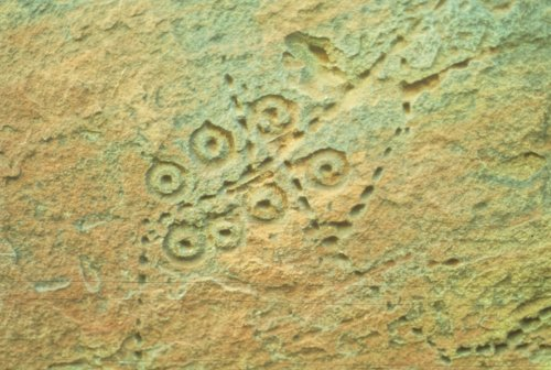 Petroglyphs from 14EW305 - Page