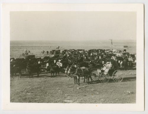 Cattle, Peter Robidoux ranch, Wallace County, Kansas - Page